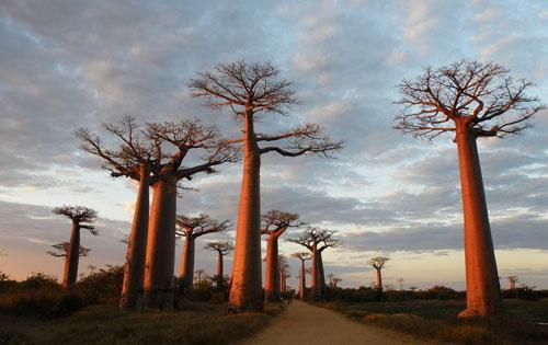马达加斯加(madagascar),全称马达加斯加共和国,为非洲东南部岛国