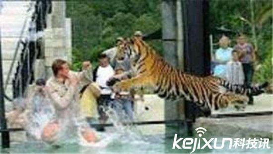 【科技讯】8月23日消息, 北京八达岭 老虎 吃人真实 视频 图解曝光,太恐怖了!近年来,动物吃人的事件发生的越发频繁了,前不久 北京八达岭 野生动物园又发生了 老虎 袭击人的事情,当时引起了很大的轰动,近日, 老虎 袭击人的瞬间 视频 图解曝光,场面血腥恐怖。    网上一段北京延庆八达岭野生动物园 老虎 伤人事件的 视频 刷爆了朋友圈,这起事件造成了游客1死1伤的悲剧。据初步调查,该事故发生在遇袭游客在园中自驾游的过程中,一名女性游客私自下车绕道驾驶室试图开门的时候遭到了 老虎 袭击,而车上的另两