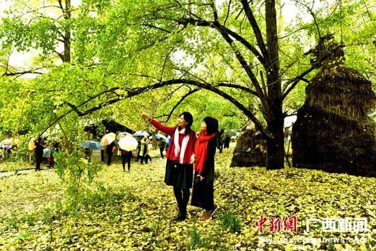 图为儿童在金色银杏树下荡秋千.